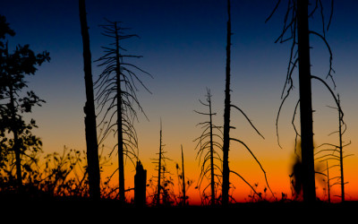 Californian Sunset in Burned Forest