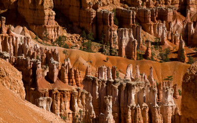 Hoodoos & Trees - Bryce Canyon