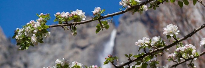 Yosemite Spring 2014 Travelogue